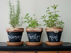 plante1